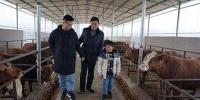 图为:陈健副理事长(左二)到华银养殖专业合作社查看黄牛养殖情况1.jpg - 残疾人联合会